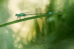 07/30 - Agrion