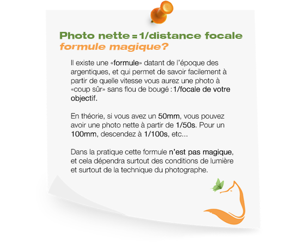 formule focale 3 Photo animalière
