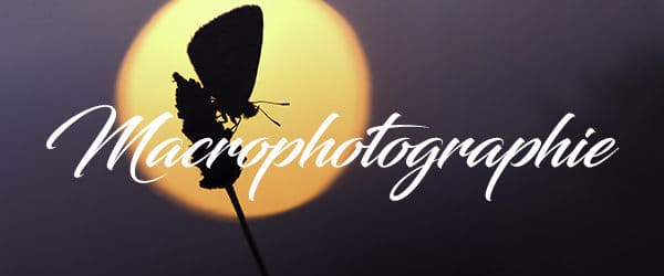 Macrophoptographie