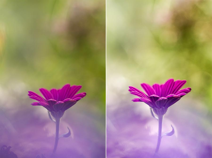 Fleur violette Photo animalière