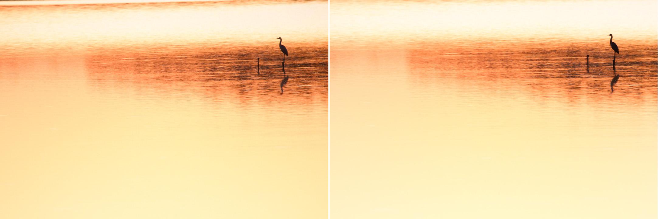 heron 2 Photo animalière