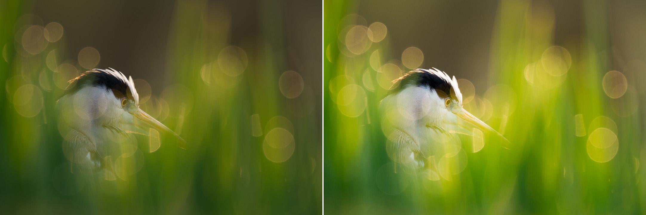 heron Photo animalière