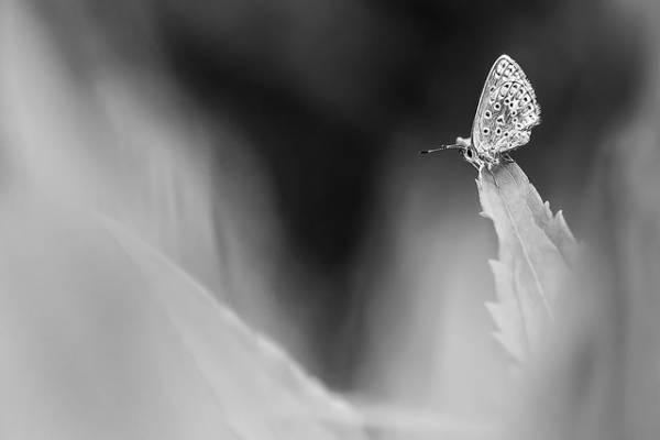 Macrophotographie noir et blanc