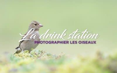Comment photographier les oiseaux à la drink station