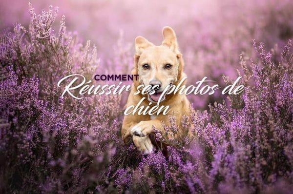 Photos de chien
