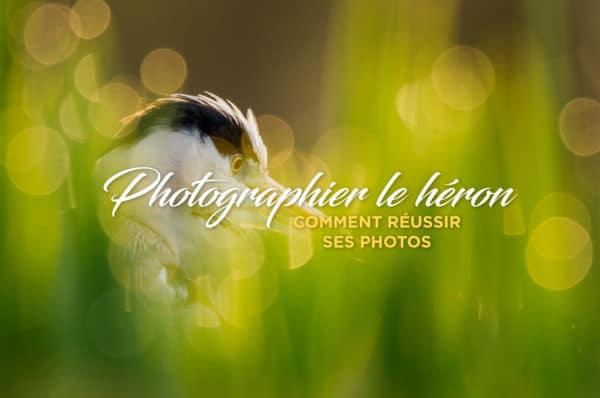 Photographier le héron