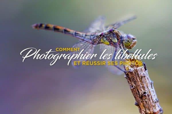 Photographier-les-libellules