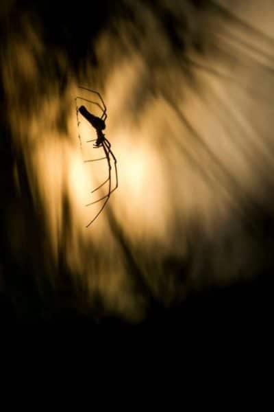 Photo d'araignée